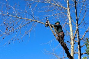 tree trimming professional tree doctor aborist searcy arkansas heber springs cabot ar