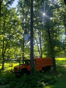 professional tree service trees trimmed tree trimming trim trims searcy cabot heber springs arkansas