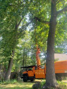 tree pruning service in searcy heber springs cabot conway beebe jacksonville arkansas ar trees pruned prune pruner