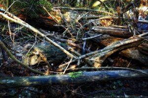 storm debris cleanup fallen tree removal log removal tornado cleanup storm cleanup searcy ar heber springs cabot arkansas
