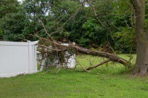 emergency tree service in arkansas storm cleanup emergency tree cleanup tree removal