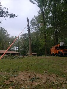 professional tree services big tree removal newport conway searcy cabot jacksonville ar best tree service arkansas cabot searcy heber springs