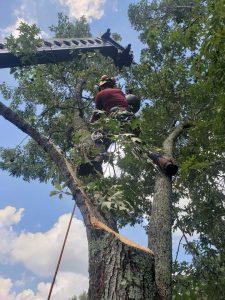professional tree doctor arbor arborist tree pros trees tree care searcy heber springs ar cabot arkansas