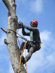 tree thinning service tree pruning tree trimming cabot vilonia jacksonville arkansas