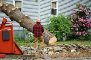 tree removal service searcy cabot augusta beebe bald knob arkansas ar trees removed remove tree heber springs arkansas
