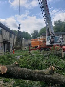 excellent tree removal service in searcy arkansas cabot heber springs
