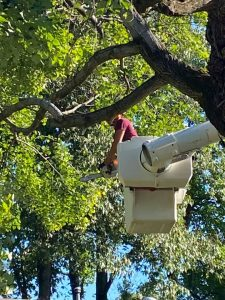 excellent tree trimmer company professional tree trimming searcy cabot vilonia conway arkansas heber springs
