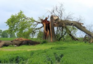 emergency tree service in searcy ar cabot heber springs