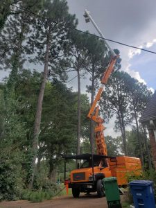 tree trimmer trees trimmed searcy arkansas tree company cabot heber springs