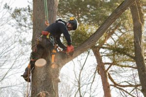 tree trimming tree pruning trees trimmed pruned tree prune trim branch trim pruning professional tree trimming searcy cabot augusta bald knob beebe arkansas white county heber springs