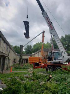best tree removal company in arkansas