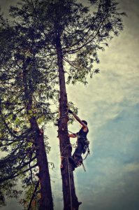 best tree service tree removal company tree services searcy cabot conway arkansas