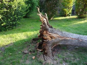 fallen tree cleanup conway arkansas