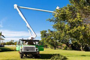 tree trimming company searcy arkansas