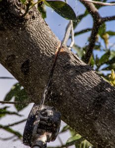 best tree company trees trimmed tree cutting searcy arkansas