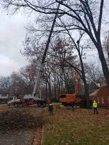 tree cutting company tree service searcy cabot augusta heber springs conway newport arkansas